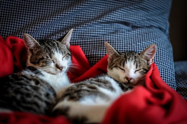 snoring remedy